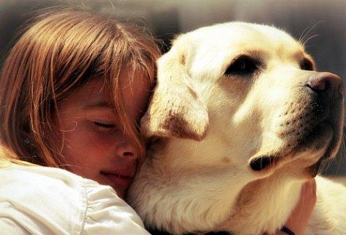 Собаки по уровню развития - двухлетние дети ,считают ученые