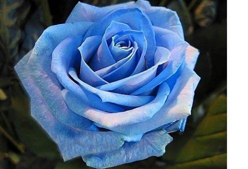 Самые экзотические цветы в мире