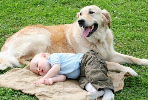 Собака в доме помогает укрепить иммунитет маленького ребенка